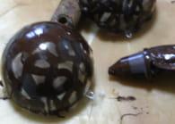 Boules de Noël en chocolat : Etape 4