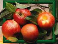 Gâteau fondant aux pommes à l'ancienne : Etape 1