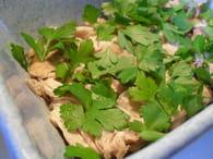 Rouelle de jambon persillé : Etape 2