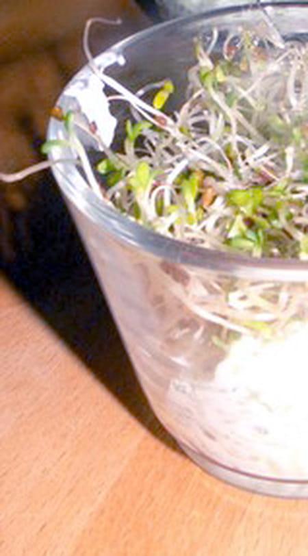 Verrine de foie gras aux lentilles vertes la recette facile - Cuisiner les lentilles vertes ...